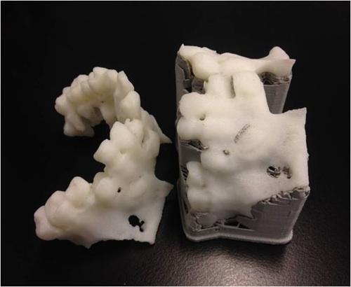Prototipo maxilar - CAFYDMA